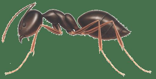 bed bug company raleigh